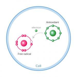 How Antioxidants Work On Free Radicals Damage.