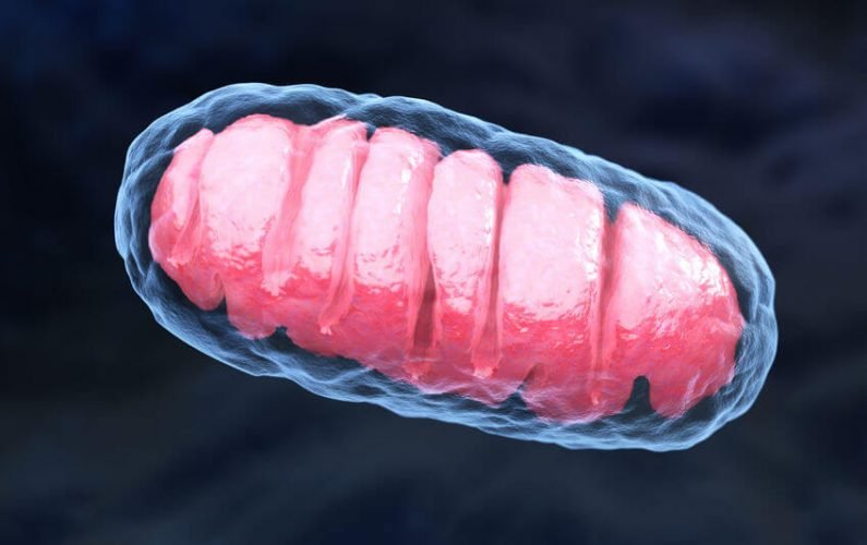 Cell Function And Health: What Is The Importance Of Mitochondria In Your Cells?