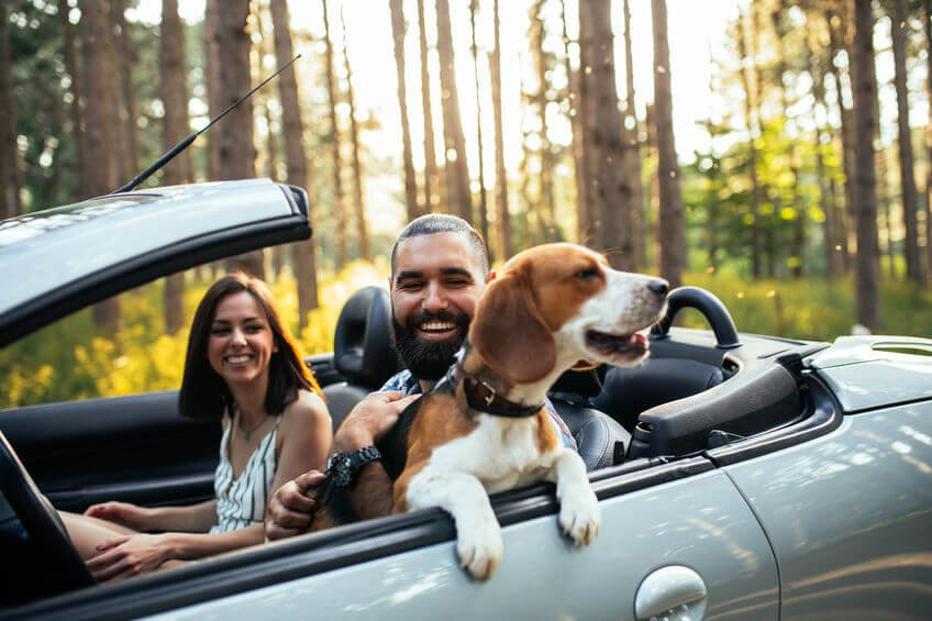 couple out for drive with dog | Unify Health Labs