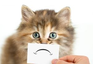 sad cat | Unify Health