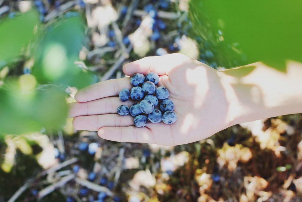paleo foods | Unify Health Labs