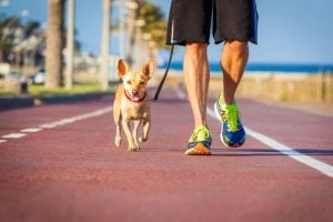 walking dog | Unify Health